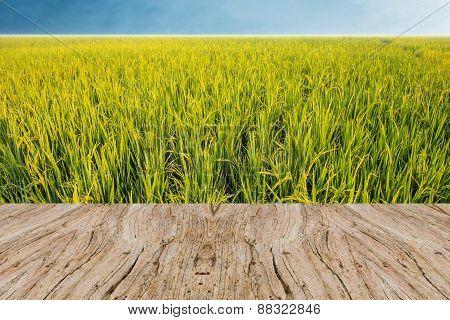 Rice Field Green Grass Background