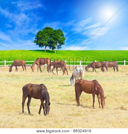 Group Of Horses On A Meadow In Farm With Beautiful Landscape