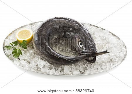 Hake on tray with ice