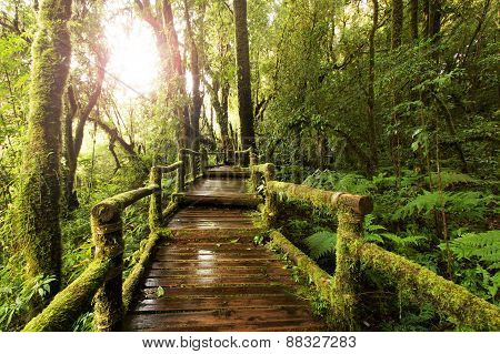 Wooden Walkway Through In Deep Rainforest