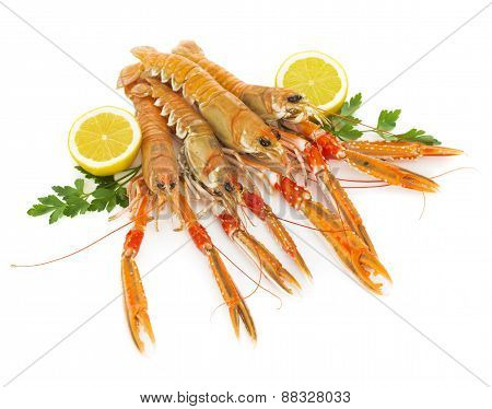 Nephrops isolated on white