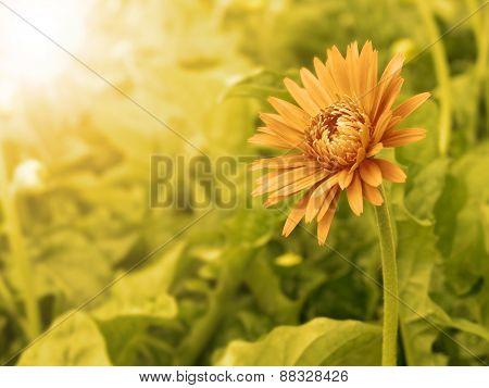 Vintage Flower In Summer Morning Time