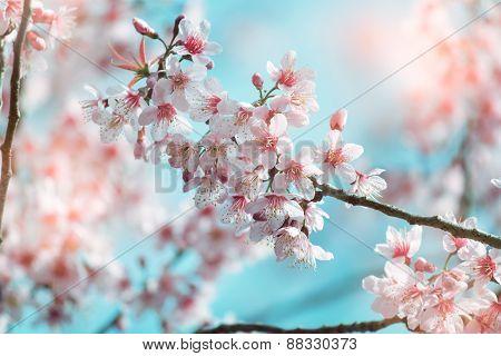 Vintage Spring Sakura Cherry Blossom