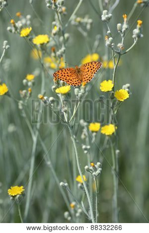 Butterfly And Flower - Signs Of Spring