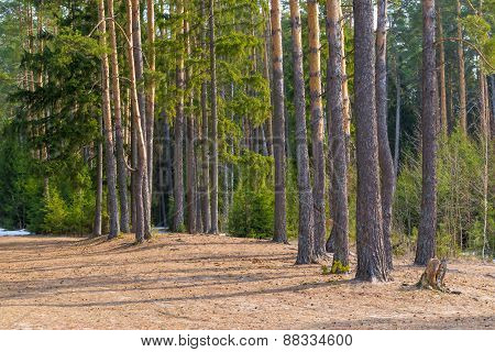Sun-warmed Forest Glade, Landscape Shot Spring