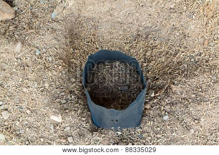 Plastic Pot With Ground Soil,focus On Pod