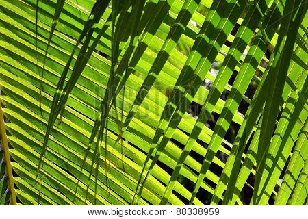 Palm leaves closeup background with shadow