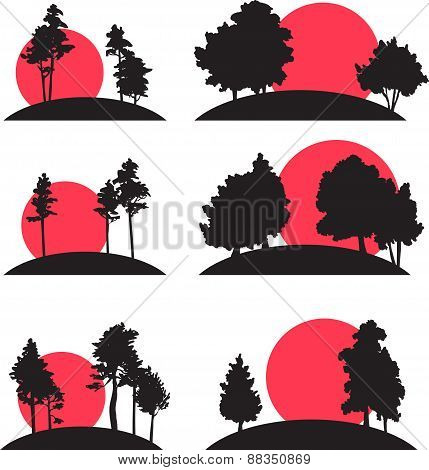 set of landscapes with trees and risisng sun