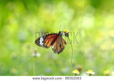 Butterfly and flower,