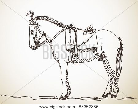 Sketch of horse Hand drawn vector illustration