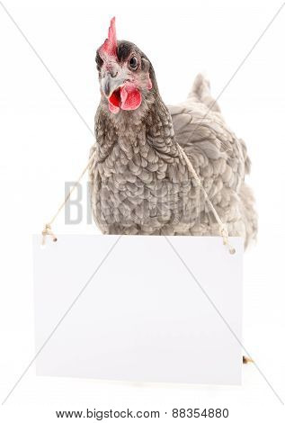 Chicken With Blank
