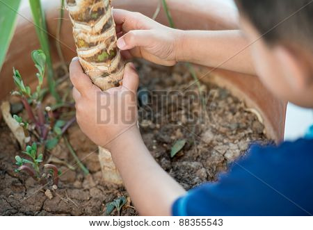 Baby planting tree