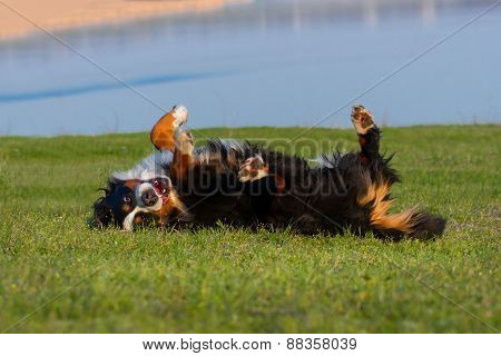Dog on spring grass