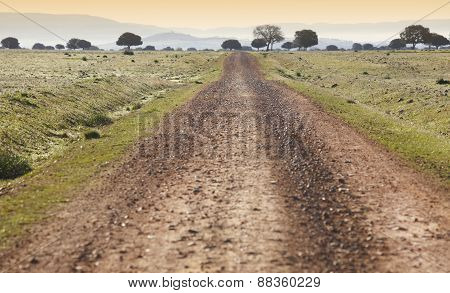 Dirty Road In A Mediterranean Meadow At Sunset. Cabeneros. Spain