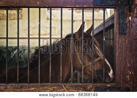 Beautiful Brown Chestnut Horse In Barn The Animal Farm
