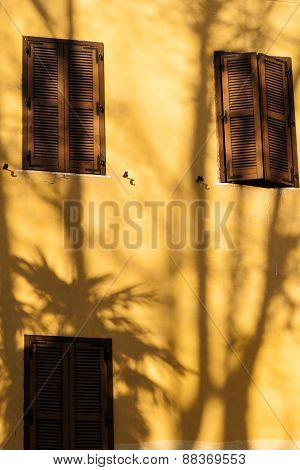 Shadow Of A Palm Tree.