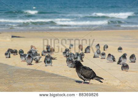 Many Pigeons On Empty Beach