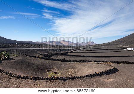 Vineyards In La Geria