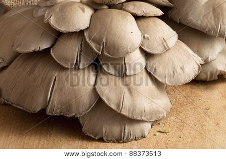 Bunch Of Mushrooms