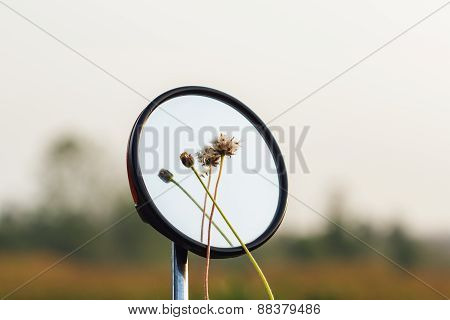 Flower Grass  On A Mirror