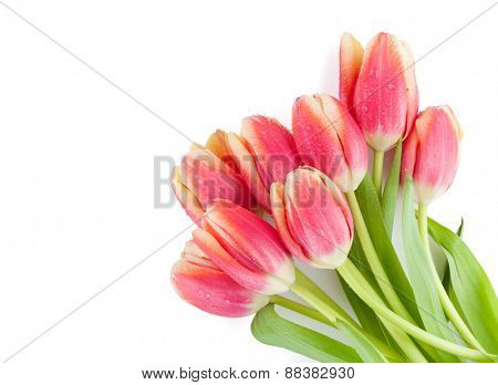 Colorful tulips bunch. Isolated on white background