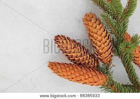 Pine Branch And Fir Cone On White Snow.