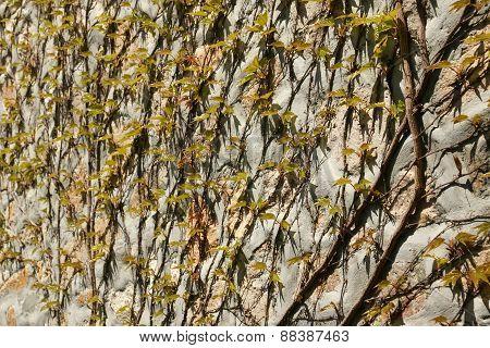 young foliage - 6