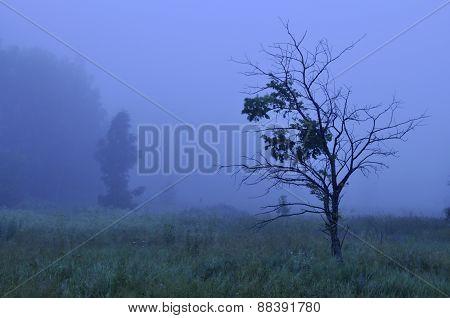Blue Mist At Dawn