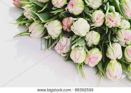 bunch of beautiful tulips - flower and plants
