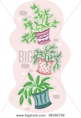 Illustration of a Group of Hanging Plants Hanging from a Wall
