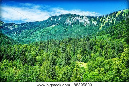 Beautiful mountain landscape, high Austrian mountains covered with fresh green pine tree forest, amazing nature of Alps, Europe