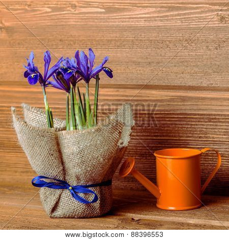 Iris Flowers In Burlap And Water Can On Wooden Background, Instagram Style.