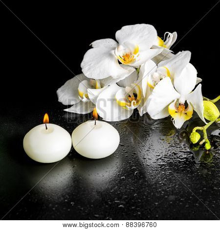 Beautiful Spa Concept Of Blooming White Orchid Flower, Phalaenopsis With Dew And Candles On Black Ba