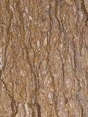 stock photo of slab  - unusual brown beautiful marble with dark veins and beige spots in a large slab - JPG