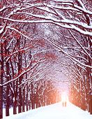 picture of tree lined street  - Two people are on the long avenue of trees along - JPG