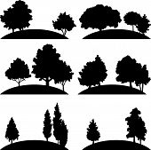 picture of linden-tree  - set of different landscapes with deciduous trees - JPG