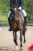picture of saddle-horse  - Closeups of a competition of dressage horses in Spain - JPG