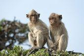 picture of monkeys  - Monkey on a tree - JPG
