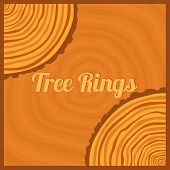 stock photo of cutting trees  - Tree rings - JPG