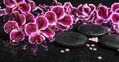 foto of geranium  - beautiful spa concept of blooming dark purple geranium flower and beads on ripple reflection dark water panorama - JPG