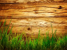 picture of grass  - Spring grass background - JPG