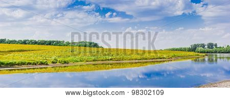 Panorama Of River With A Field Of Sunflowers On Bank