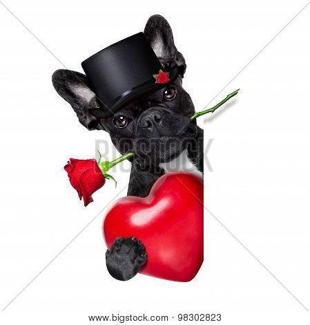 Valentines Rose Dog