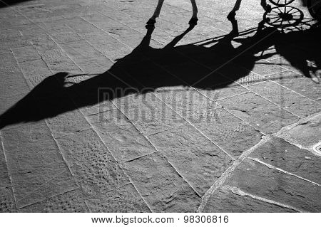 Horse Walking Up The Cobblestone Pavement Of Florence, Italy
