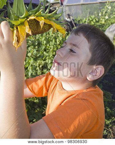 cute little boy with sunflower