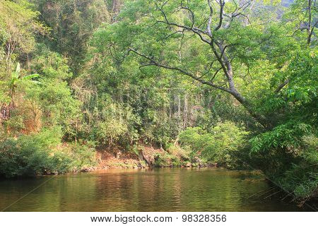 River in deep forest