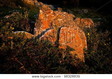 Lichen-covered Rocks At Dawn