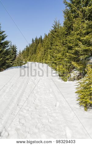 Trail In The Snow Along The Spruce