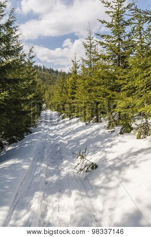 Spring And Winter Trail