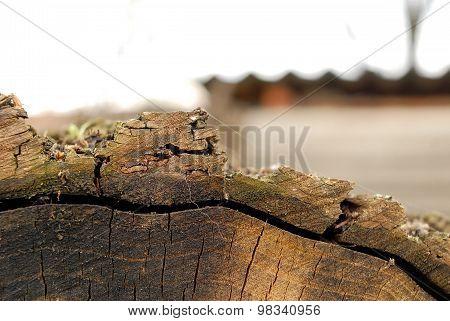 Cut Logs